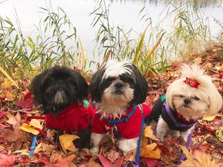 Sunday Funday; Powerwalk With Dogs