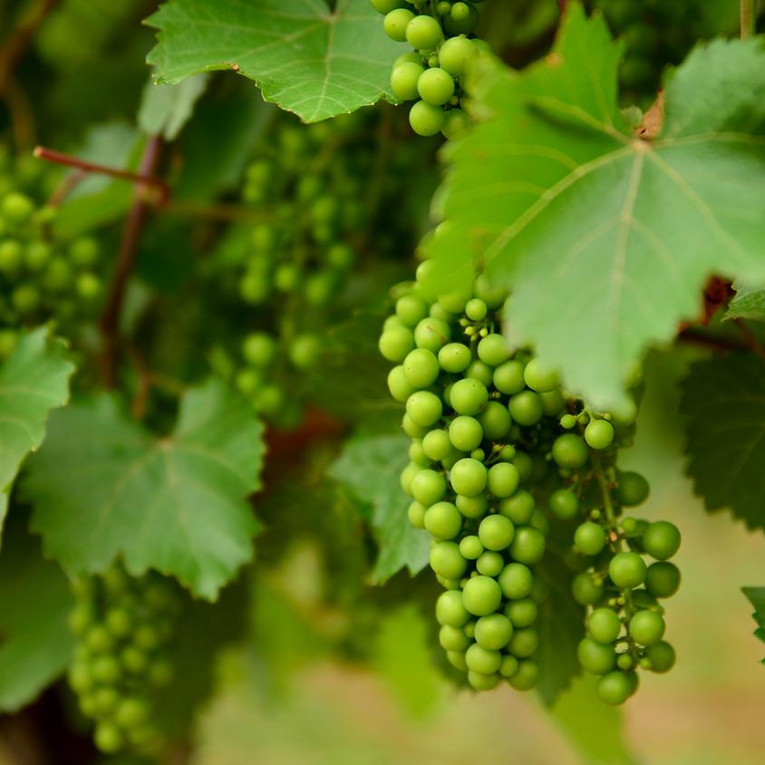 Harvest Party at Bent Ridge Winery!