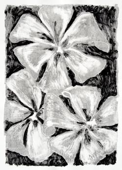 Black Tulips Ghost