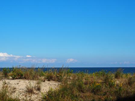 November Updates at Sea Colony