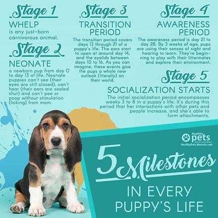 puppy milestones.jpg