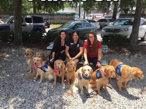 Cachorros vão até Orlando para ajudar vítimas de tiroteio