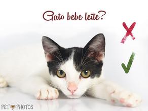 Gatos podem beber leite?