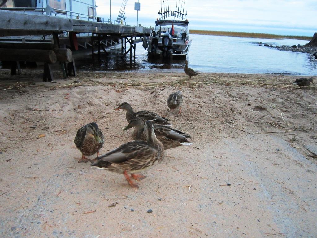 берег Онежского озера
