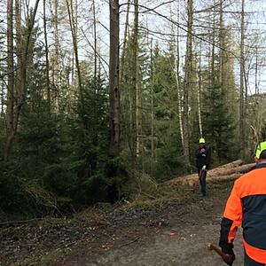 Holzfällen Rabenwald