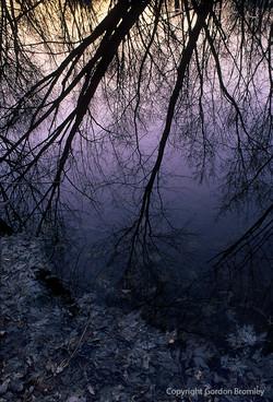 Reflection I calypso