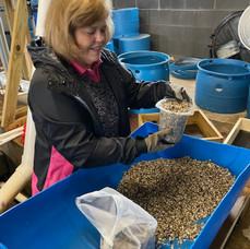 Susan counting liters of seed.jpg