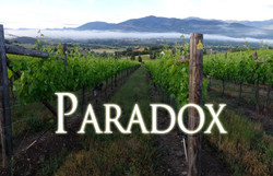 Paradox Vineyard