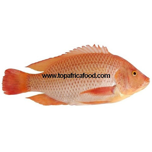 POIS0437-0448 TILAPIA ROUGE GUTTED AND SCALED EN VRAC