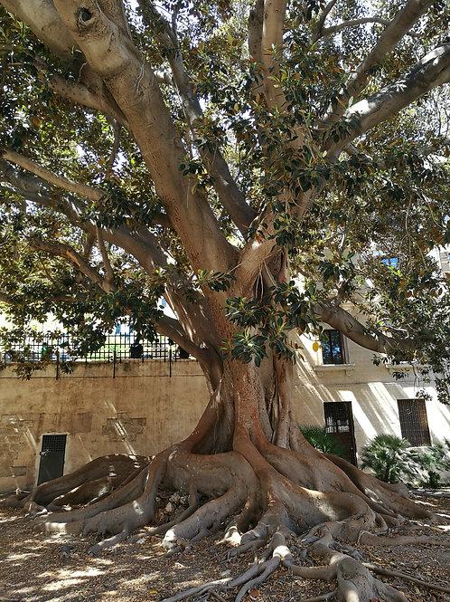 Baum (Hochformat)