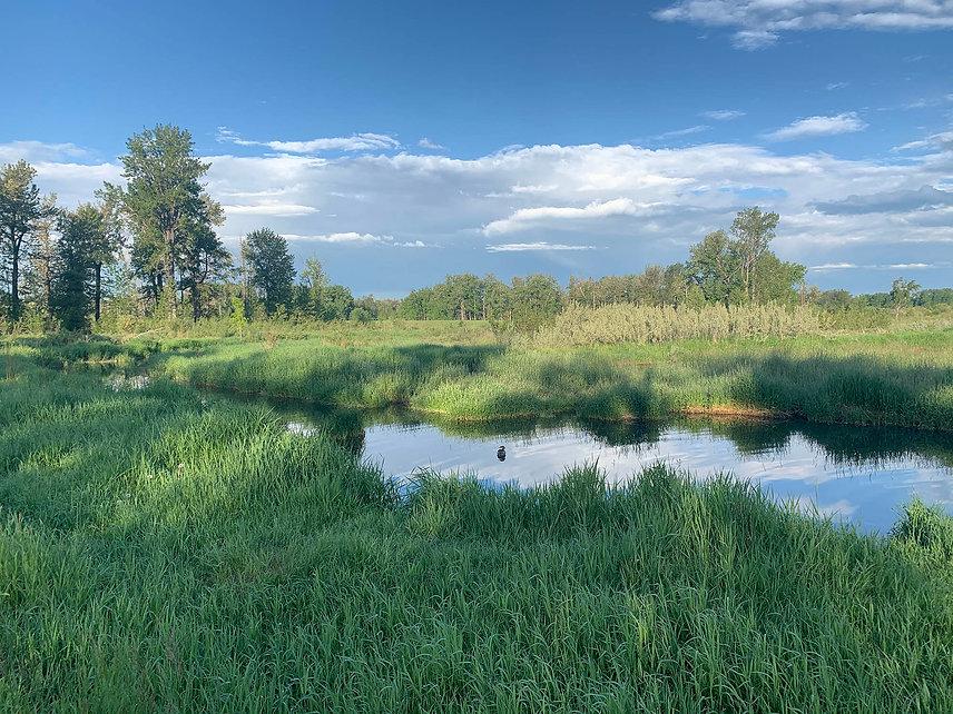 fish creek park.jpg