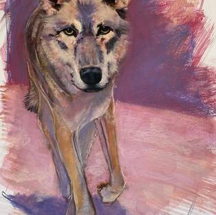 Mexican Grey Wolf 1300.jpeg