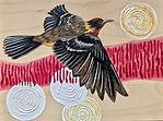 Endangered-Alberta_Bay-Breasted-Warbler_