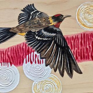 Endangered Alberta Bay Breasted Warbler