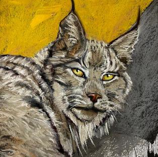 Canadian Lynx 595.jpeg