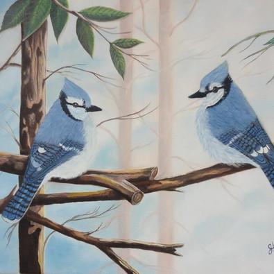 Les geais bleus
