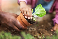 potting plant GettyImages-1221266147.jpg