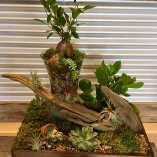 Jardin de plantes et succulentes