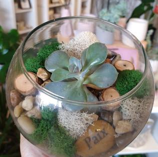 Petit terrarium avec pierre