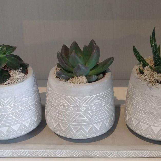 Pot aztec et plante