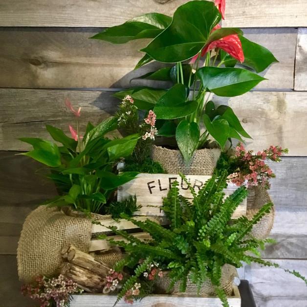 Trio de boîtes en bois et plantes