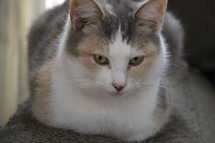 Sweetie Lulu Tundra - Cat
