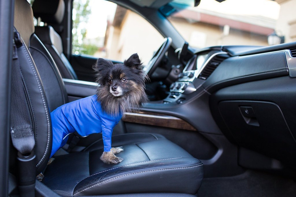 shark tank onesie for dogs shed defender