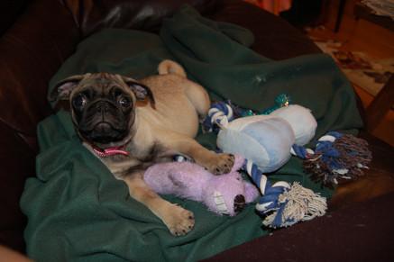 Meet Trixie!