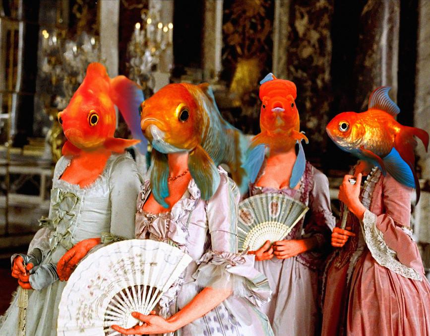 Goldfish (1).jpg