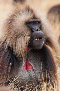 Parc National des Simien