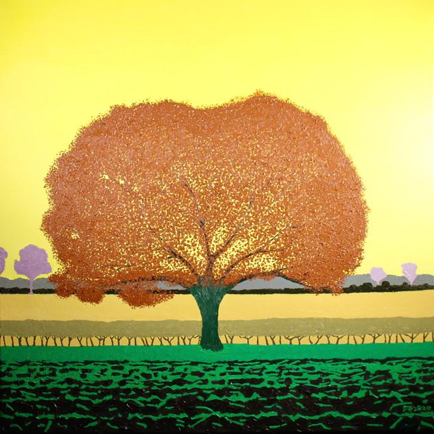 Fen Drayton Tree, Autumn, oil on canvas, 60 x 60 cm