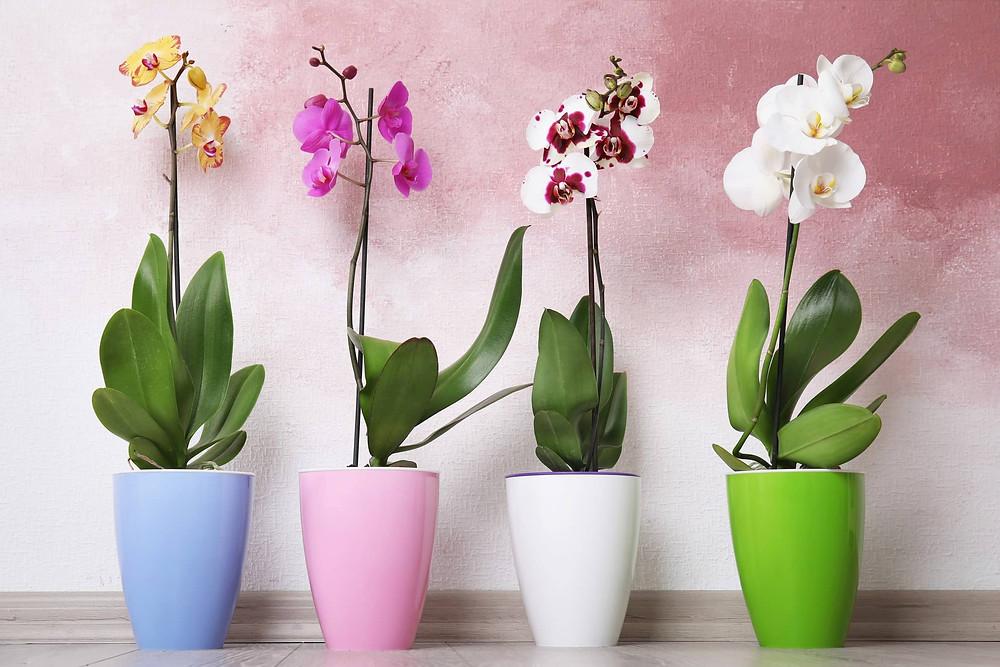 4 chậu hoa lan trang trí nhà