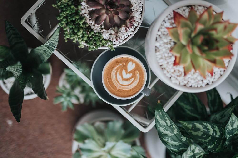 cafe latte cùng chậu xương rồng cảnh