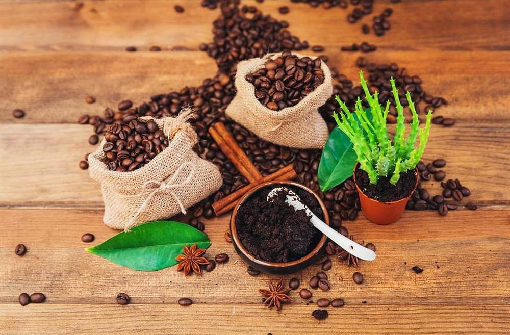 bã cafe dùng để bón cây trồng
