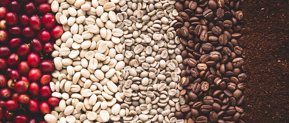 các giai đoạn phát triển từ hạt cafe thô tới khi rang xay