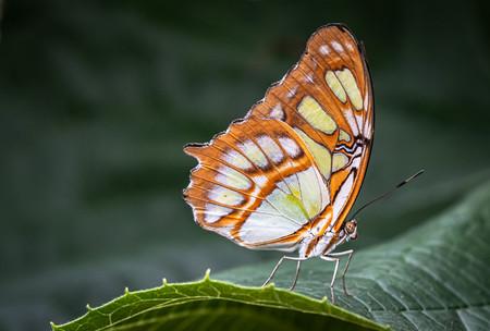 2019RFNHM_PDI_010 - Malachite Butterfly by Pauline McAleese.