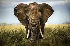 Eyes for Africa - SA Travel Facilitators