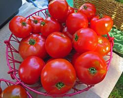 2015 tomatoes