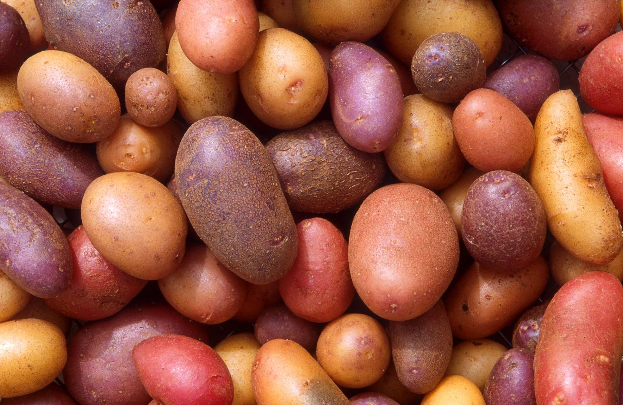 2015 potatoes
