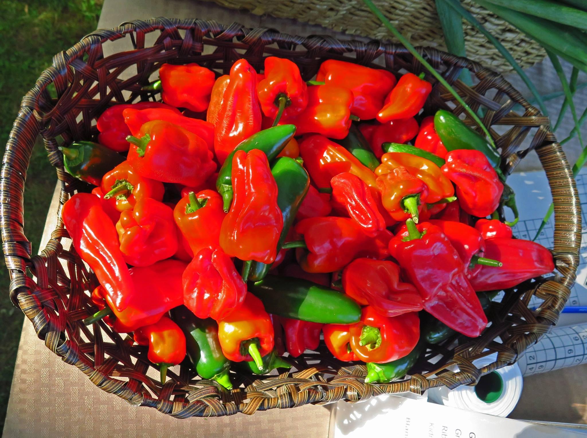2015 pepper