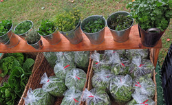 2015 herbs