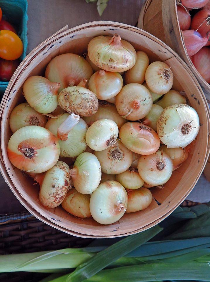 2015 onions