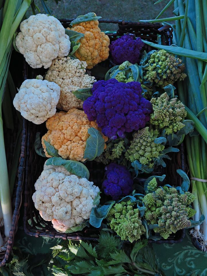 2015cauliflower
