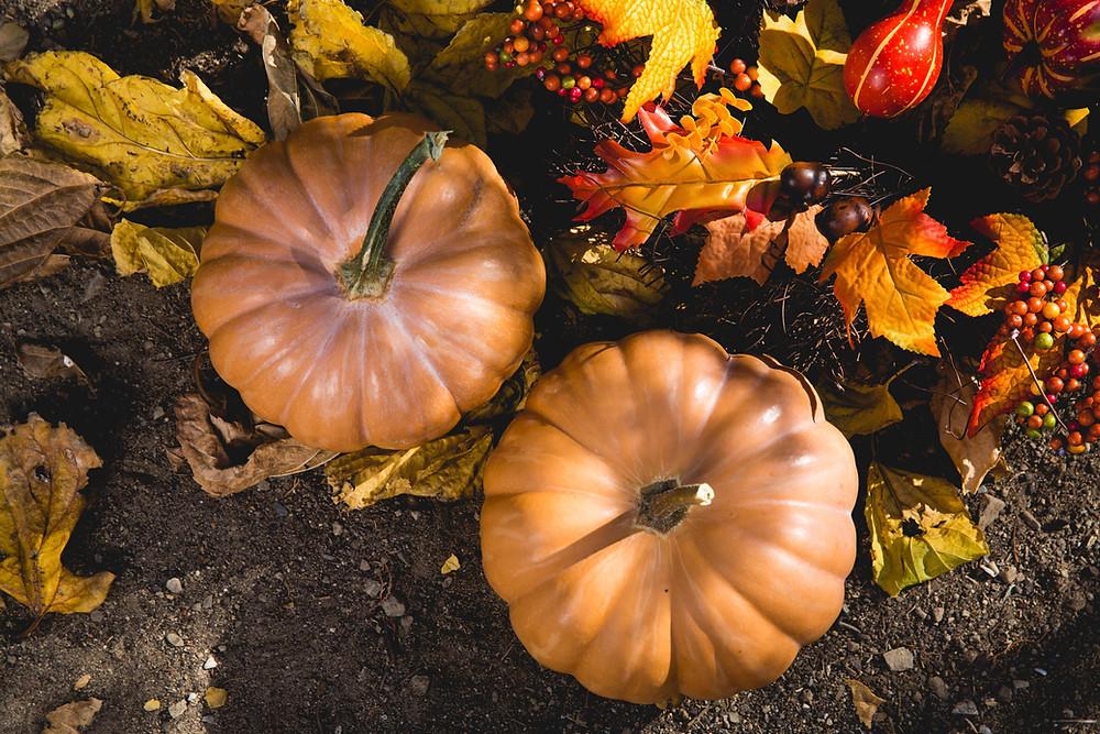 Autumn pumpkin and leaves