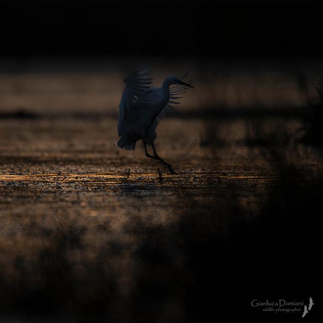 Landing Shadows