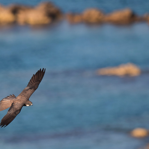 In flight over the Coast