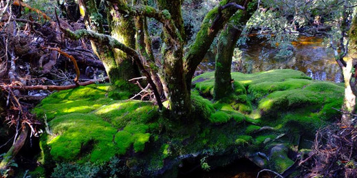 Faerie forest