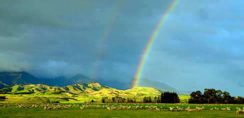NZ pastorale