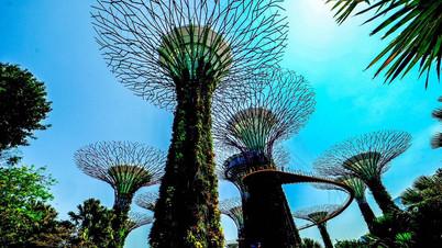Sky trees, Singapore