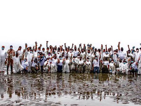 Cerca de 2.000 plantas de mangle rojo fueron sembradas en el Refugio de Vida Silvestre El Morro